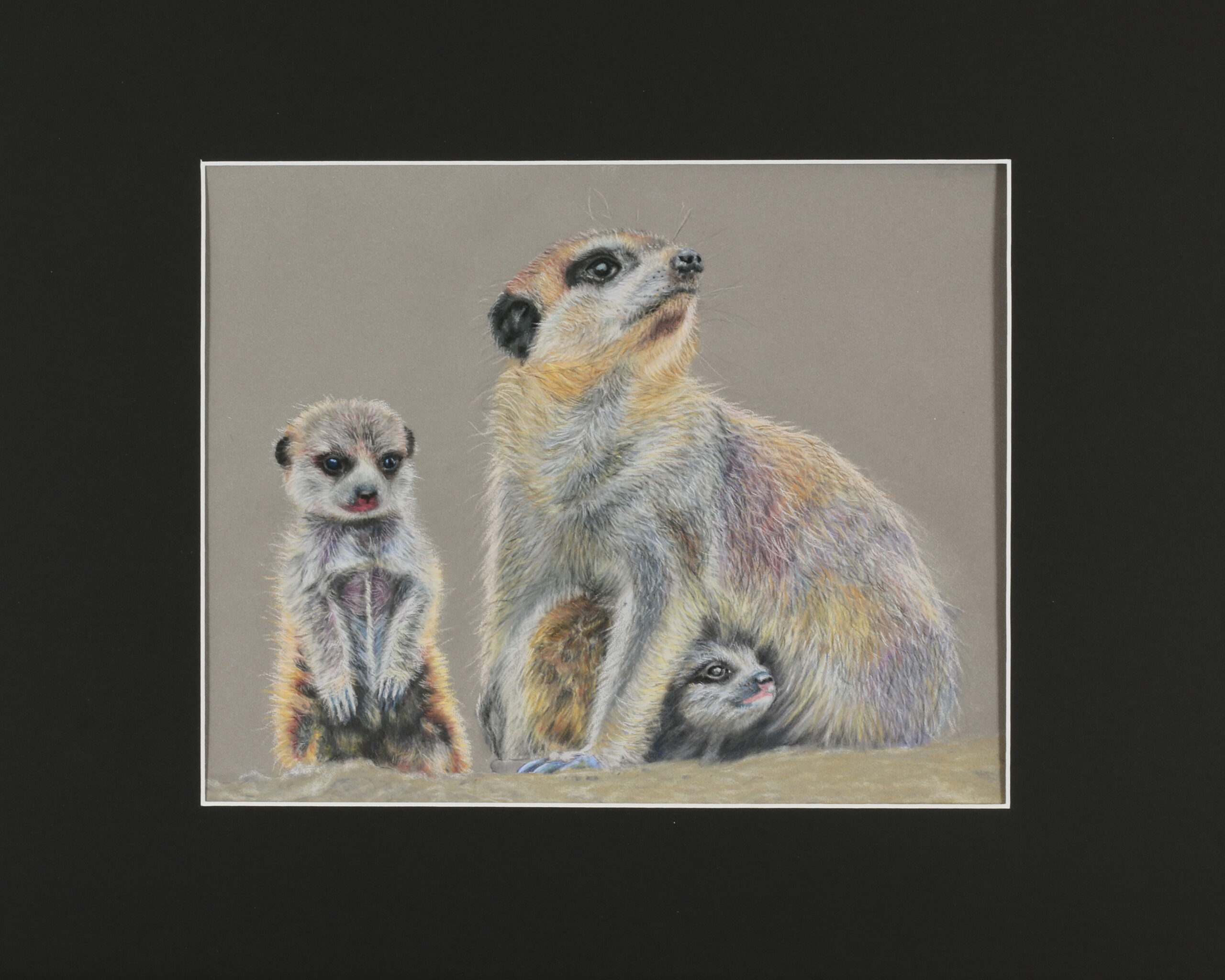 Meerkats 24x32 Pastels - Photo reference by Bianca Schmidt/Off Leash Photography
