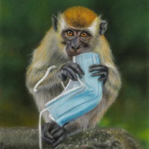Macaque Nibbles 24x32 Pastels 03-2021