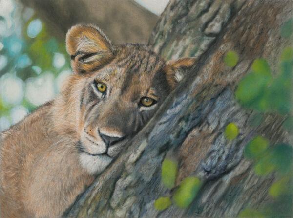 Young Lion 24x32 Pastels