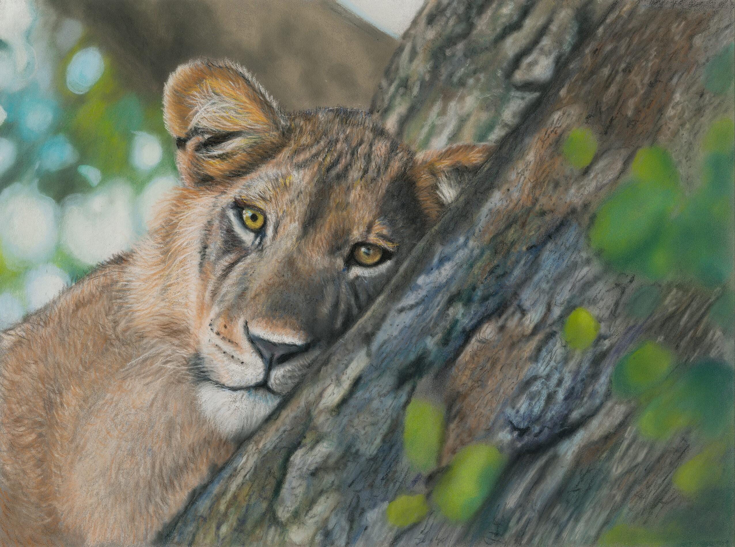 Tree Climbing Lion 24x32 Pastels 03-2021